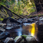 Nature Photography in Muir Woods National Park
