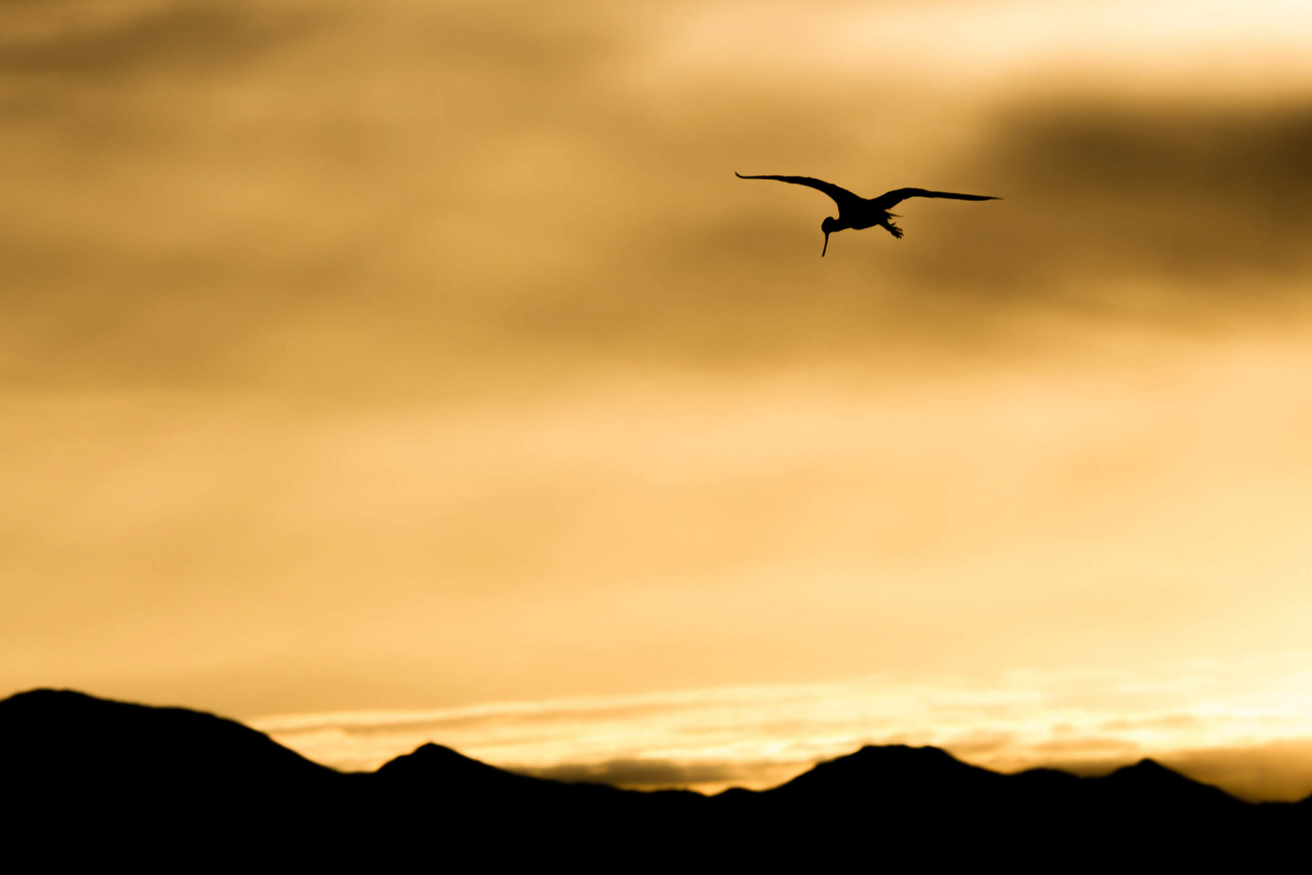 Sunrise in Wetlands Park