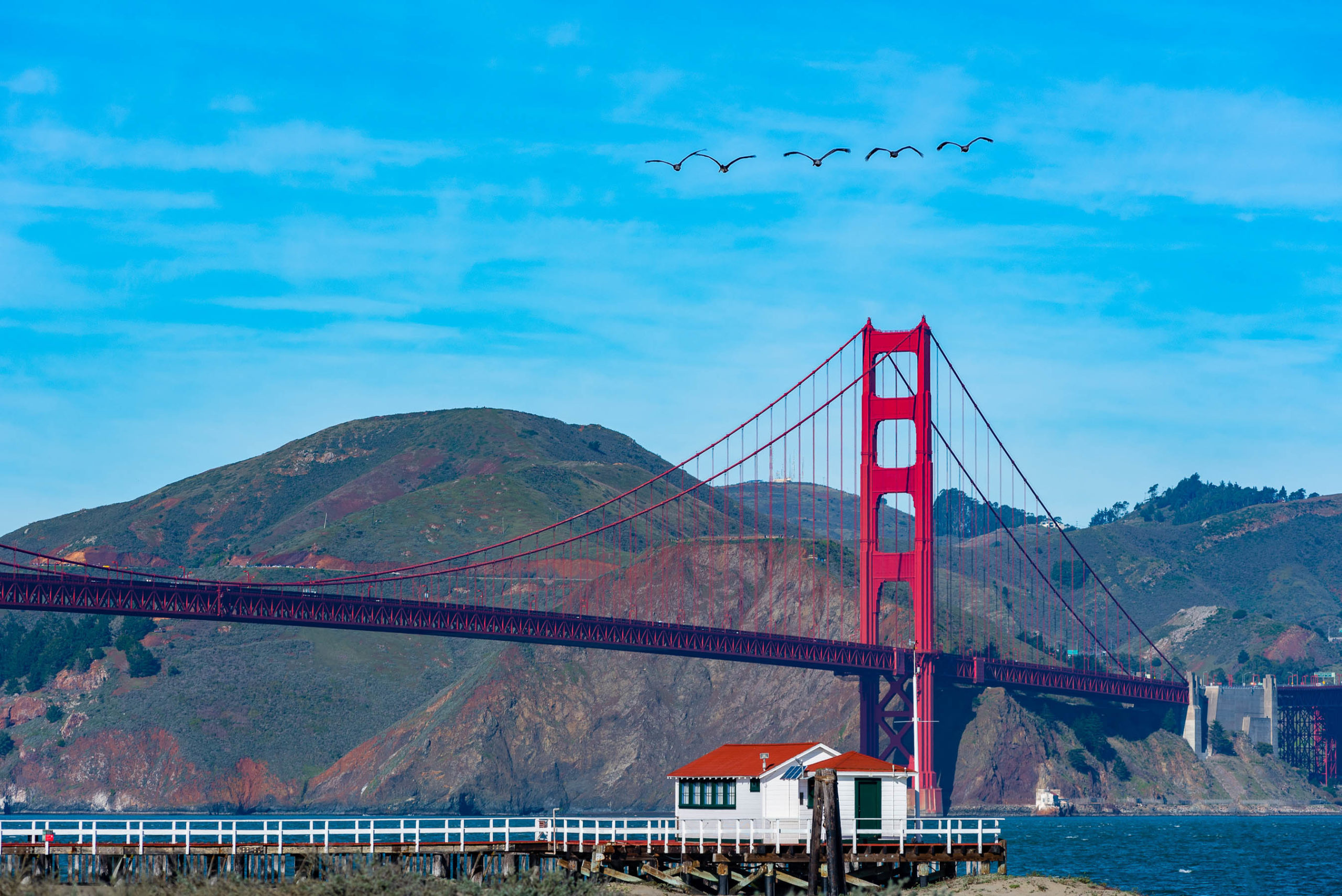 Pelicans flying by the Golden Gate Bridge